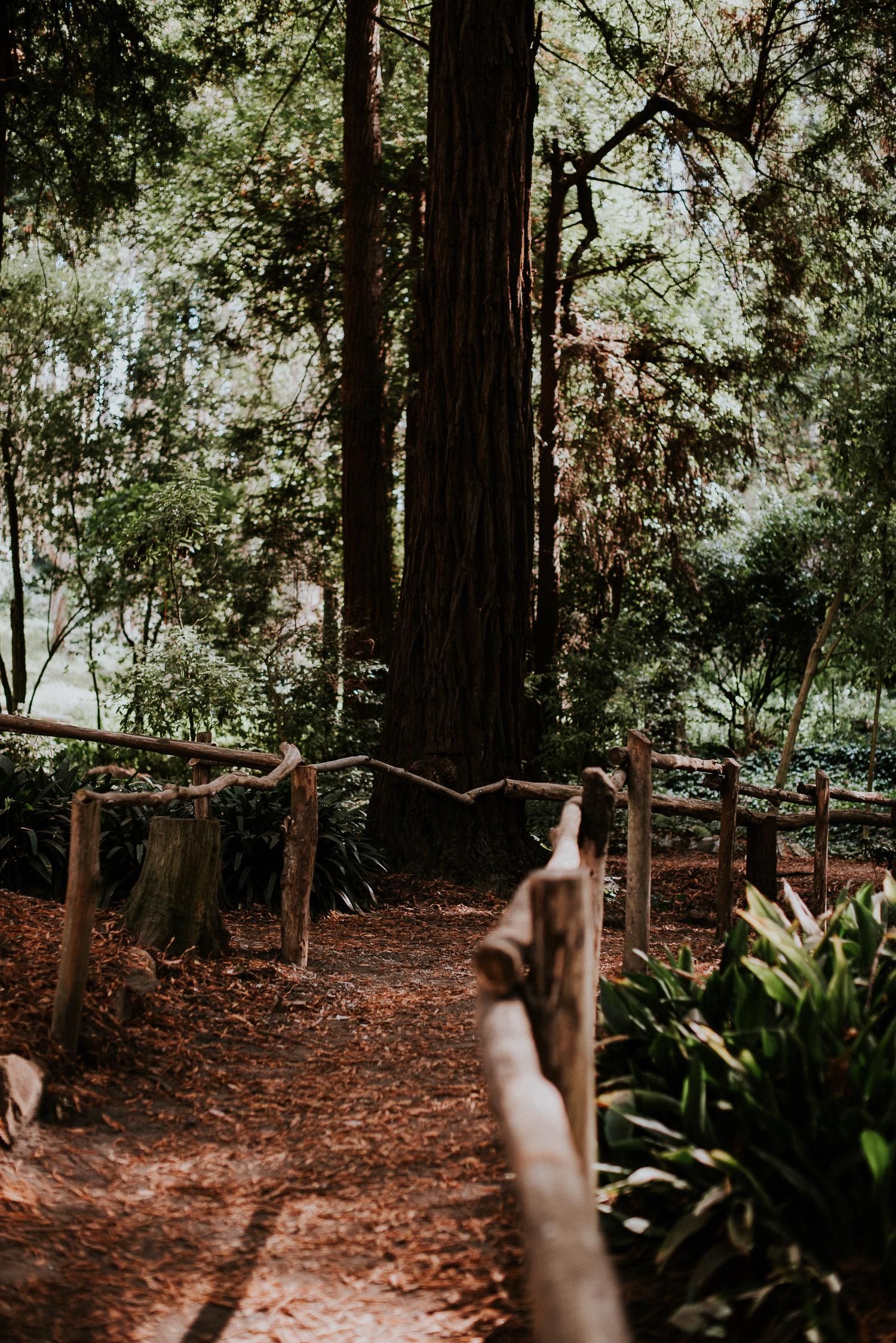 stern_grove_san_francisco_california_america_wedding_katy_webb_photography_UK2